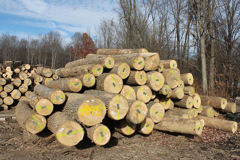 Veneer logs, four sides clear